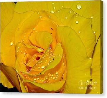 Yellow Rose With Droplets By Kaye Menner Canvas Print by Kaye Menner