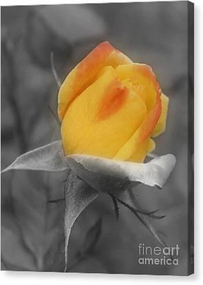 Yellow Rosebud Partial Color Canvas Print