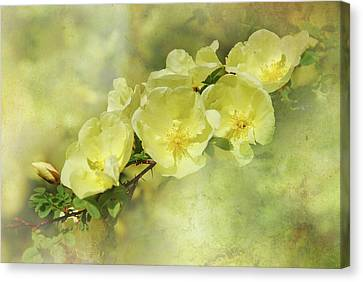 Canvas Print featuring the photograph Yellow Roses by Elaine Manley