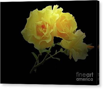 Yellow Roses On Black Canvas Print