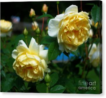 Yellow Roses Canvas Print by Smilin Eyes  Treasures