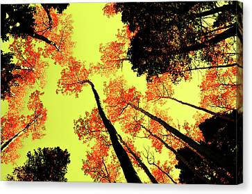 Canvas Print featuring the photograph Yellow Sky, Burning Leaves by Kevin Munro