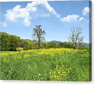 Yellow Spring Canvas Print by Susan Leggett