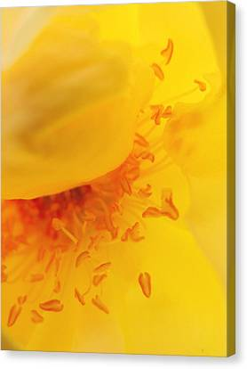 Yellow Stamen Canvas Print