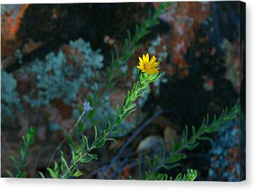 Yellow Stretching Canvas Print