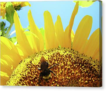 Yellow Sunflower Art Prints Bumble Bee Baslee Troutman Canvas Print by Baslee Troutman
