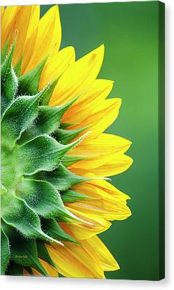 Yellow Sunflower Canvas Print by Christina Rollo