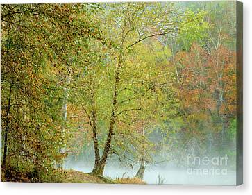 Canvas Print featuring the photograph Yellow Trees by Iris Greenwell