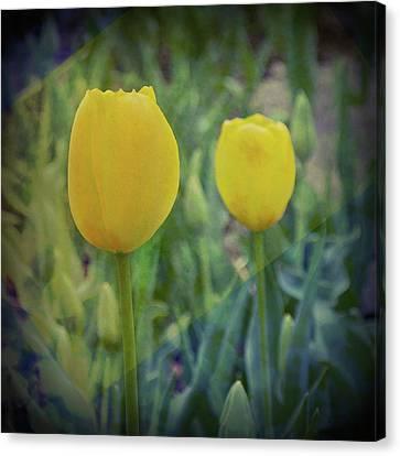 Yellow Tulip Art Canvas Print