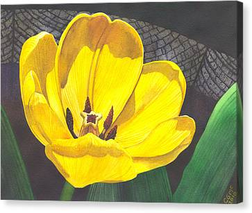 Yellow Tulip Canvas Print by Catherine G McElroy