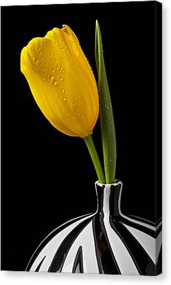 Yellow Tulip In Striped Vase Canvas Print by Garry Gay