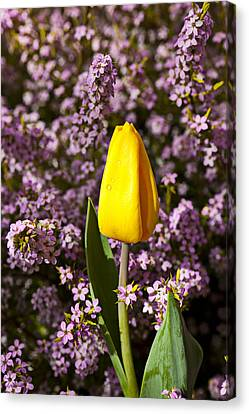 Wet Leaves Canvas Print - Yellow Tulip In The Garden by Garry Gay