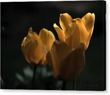 Canvas Print featuring the photograph Yellow Tulip Spotlight by Michael Flood