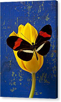 Yellow Tulip With Orange And Black Butterfly Canvas Print by Garry Gay