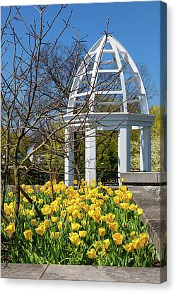 Franklin Park Canvas Print - Yellow Tulips And Gazebo by Tom Mc Nemar