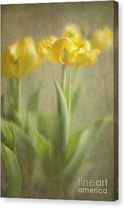 Canvas Print featuring the photograph Yellow Tulips by Elena Nosyreva