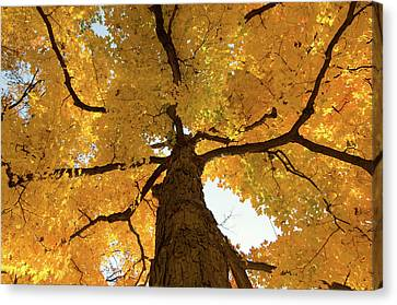 Yellow Up Canvas Print by Steve Stuller