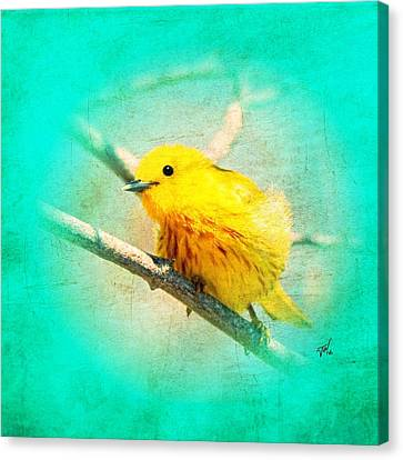 Canvas Print featuring the photograph Yellow Warbler by John Wills
