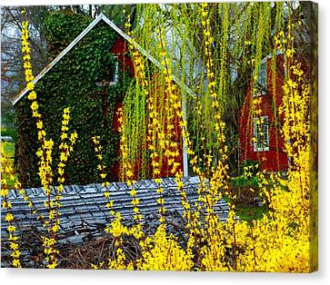Yellow Weeds Canvas Print by Michael L Kimble