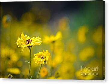 Canvas Print featuring the photograph Yellow Wild Flowers by Kelly Wade
