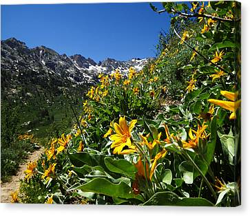 Canvas Print featuring the photograph Yellow Wildflowers by Alan Socolik