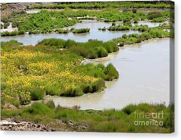 Yellow Wildflowers At Mud Volcano Area In Yellowstone National Park Canvas Print by Louise Heusinkveld