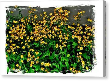 Yellow Wildflowers Canvas Print by Marsha Heiken