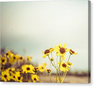 Yellow Wildflowers Canvas Print by Mary Hone