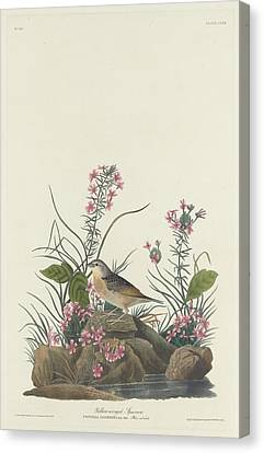 Yellow-winged Sparrow Canvas Print by Rob Dreyer