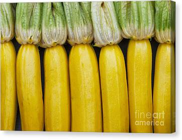 Yellow Zucchini Canvas Print by Tim Gainey