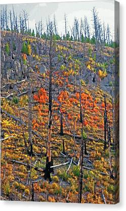 Yellowstone - Forest Burn 1 Canvas Print by Steve Ohlsen