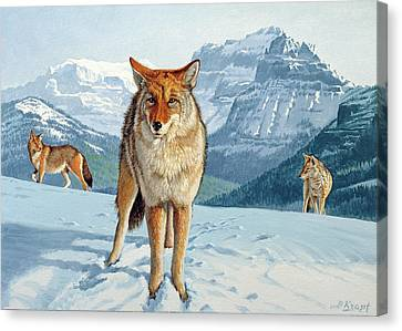 Yellowstone Coyotes Canvas Print by Paul Krapf