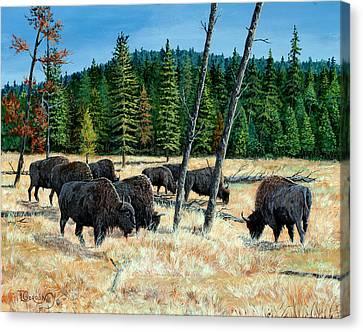 Yellowstone Grazers Canvas Print