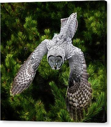 Yellowstone Great Grey Owl Canvas Print