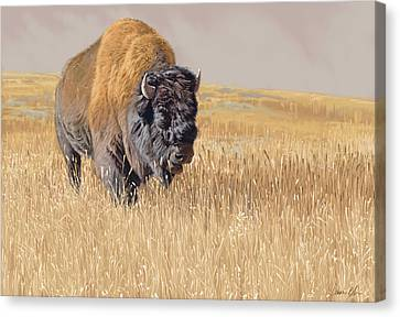 Bison Canvas Print - Yellowstone King by Aaron Blaise