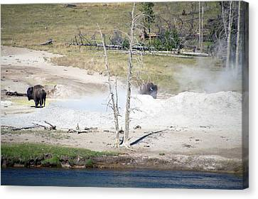 Bare Trees Canvas Print - Yellowstone Park Bisons In August by Thomas Woolworth
