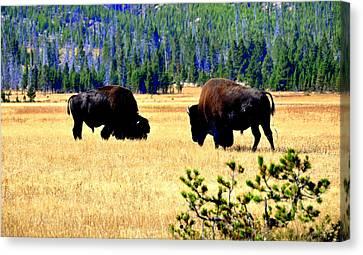 Yellowstonepark Canvas Print by Aron Chervin