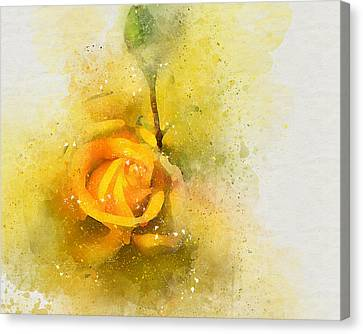 Yelow Rose Canvas Print