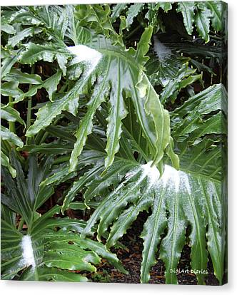 Philodendron Canvas Print - Yes Snow In Florida by DigiArt Diaries by Vicky B Fuller
