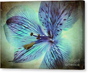 Flora Canvas Print - Yesterday by Krissy Katsimbras