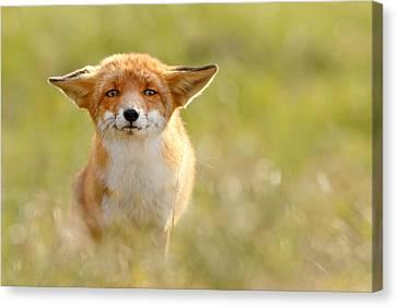 Yoda - Funny Fox Canvas Print