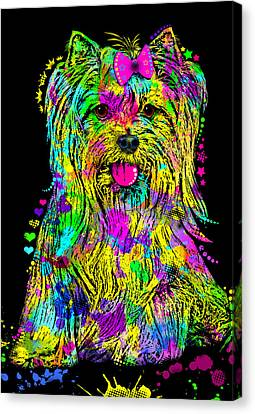 Yorkie Beauty Canvas Print by Zaira Dzhaubaeva