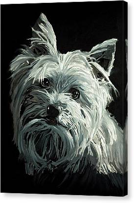 Yorkie Canvas Print by Enzie Shahmiri