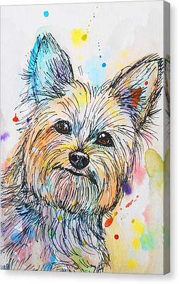 Yorkie  Canvas Print by Nicole Chen