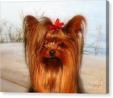 Yorkie Princess Canvas Print