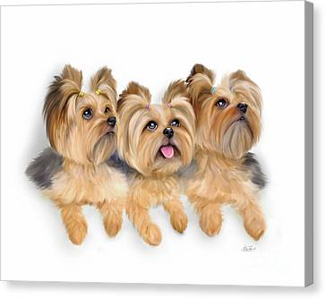 Yorkie Trio Canvas Print
