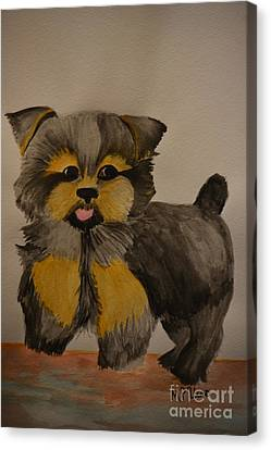 Yorkie Youth Canvas Print by Maria Urso
