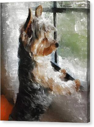Standing Canvas Print - Yorkshire Terrier  Its Warm In Here But So Much More Interesting Out There by JG Keevil