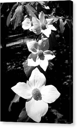 Yosemite Dogwoods Black And White Canvas Print