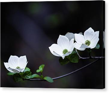 Dogwood Lake Canvas Print - Yosemite Dogwoods by Larry Marshall